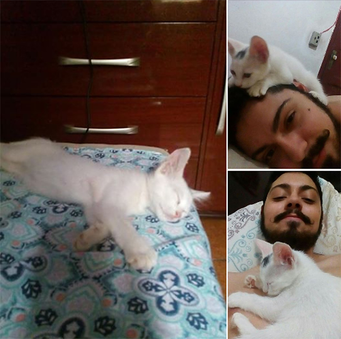 stray kitten found sleeping in bed