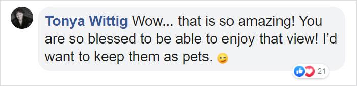 tonya wittig facebook comment