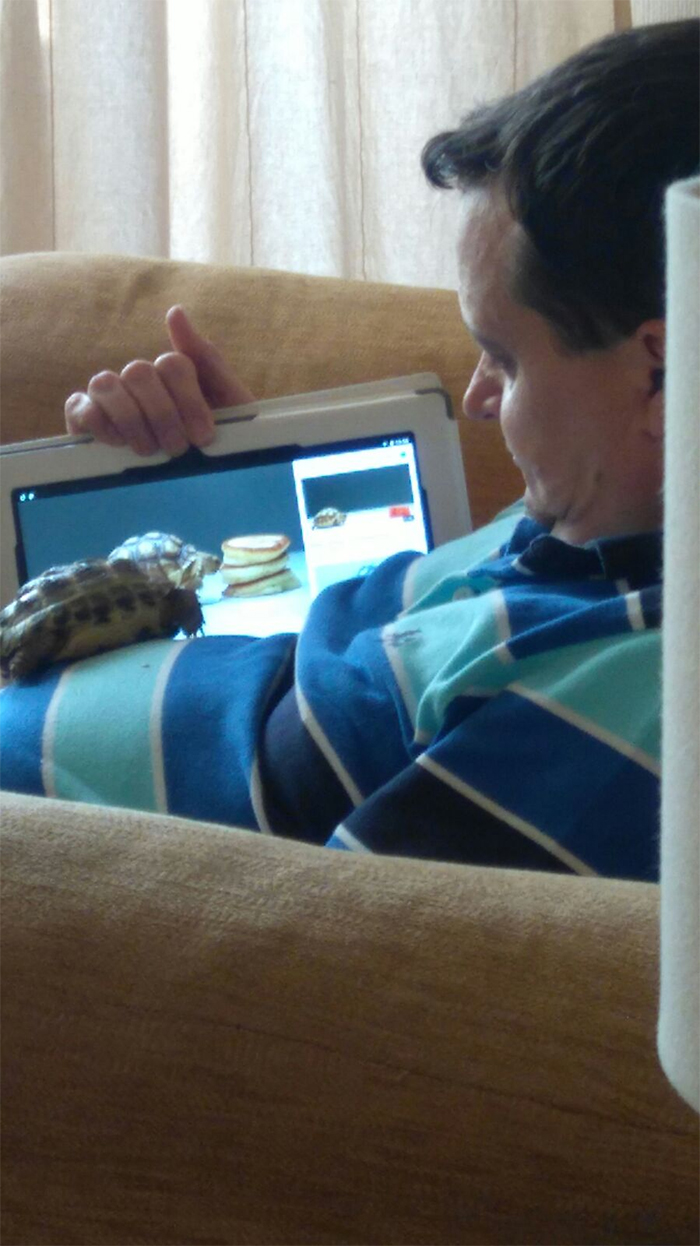 tortoise and owner watching turtle videos