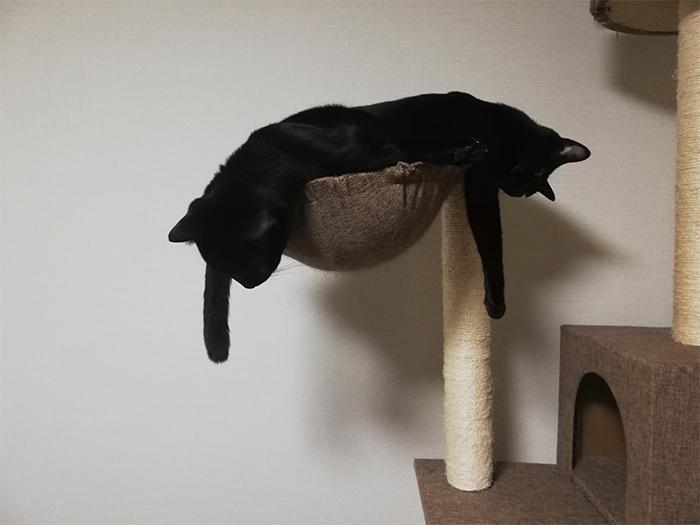 two black kitties in one bed