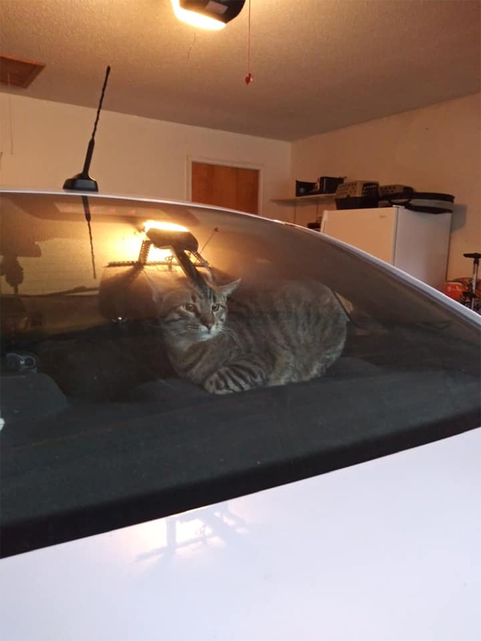 unfamiliar kitty inside car