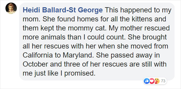 woman welcomes pregnant stray cat comment heidi