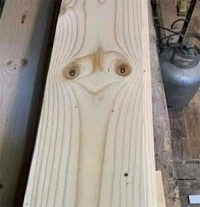 wood plank ostrich