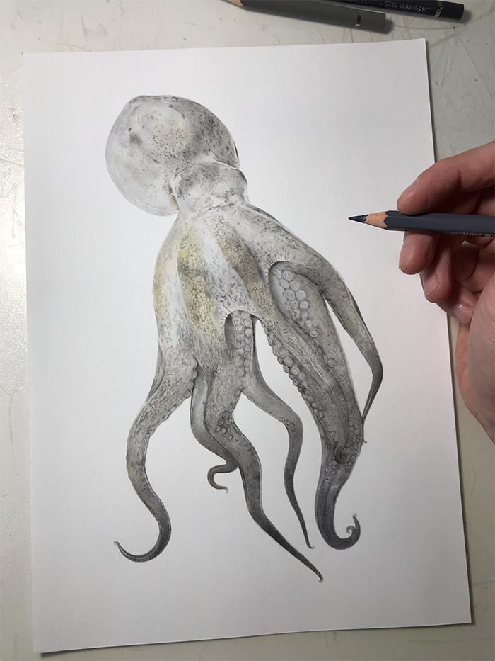 yuki tokuda octopus illustration