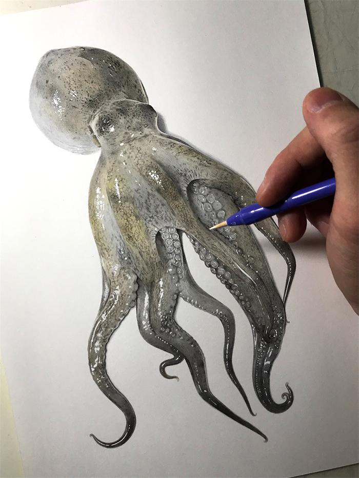 yuki tokuda realistic octopus drawing