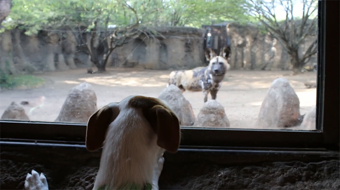 zoo and shelter animals meeting up