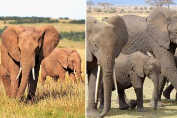 Kenya elephant population