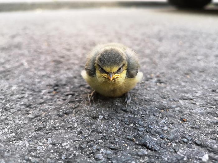 angry bird on street
