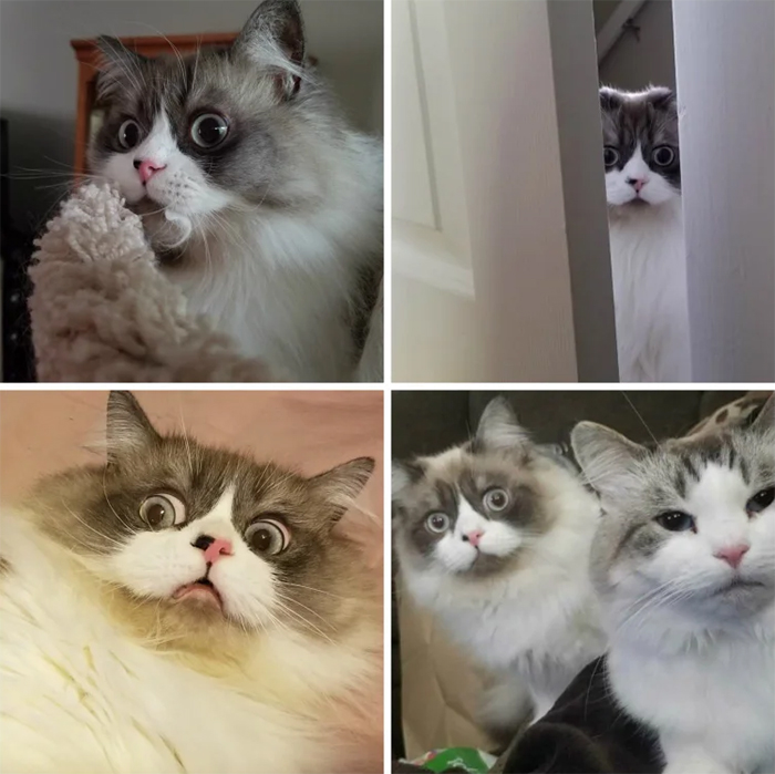 anxious-looking kitty