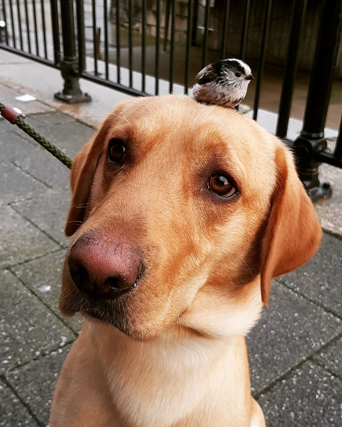baby bird sitting on a dog's head