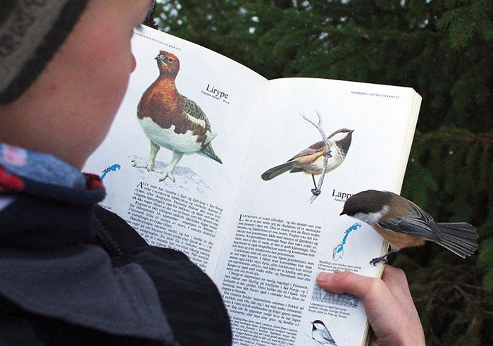 bird landing on a book page about itself