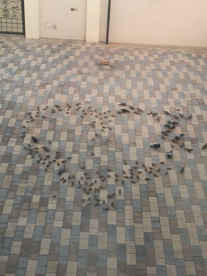 birds in heart formation