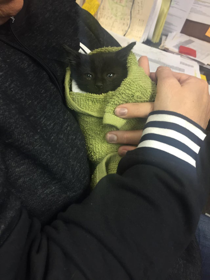 black kitten wrapped around in green towel
