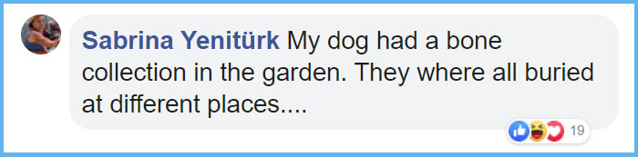 bruce dog stick collection comment sabrina