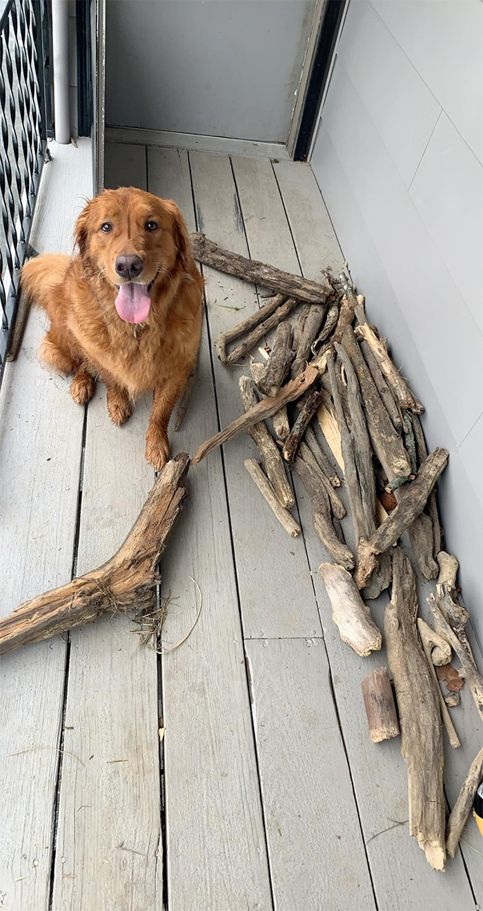 bruce dog stick collection