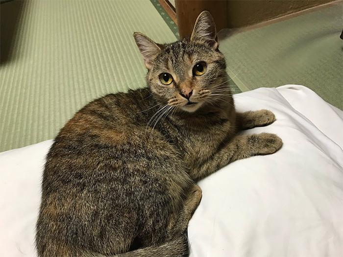 cat-friendly japanese inn