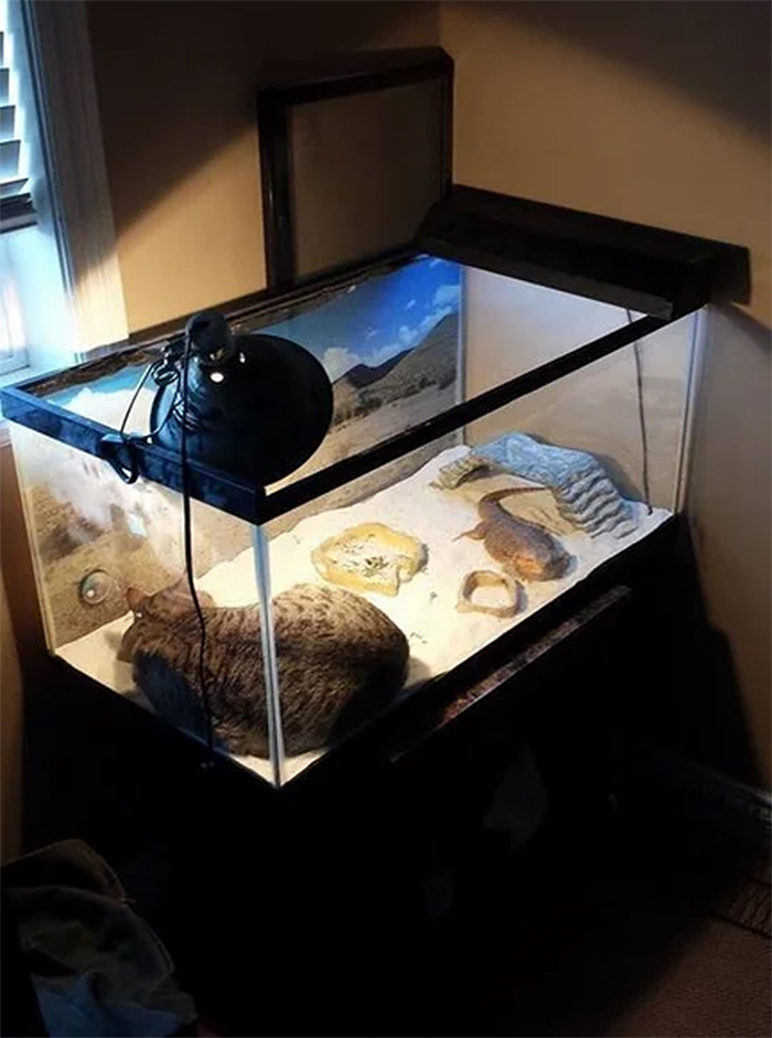 cat sleeping inside a reptile glass tank