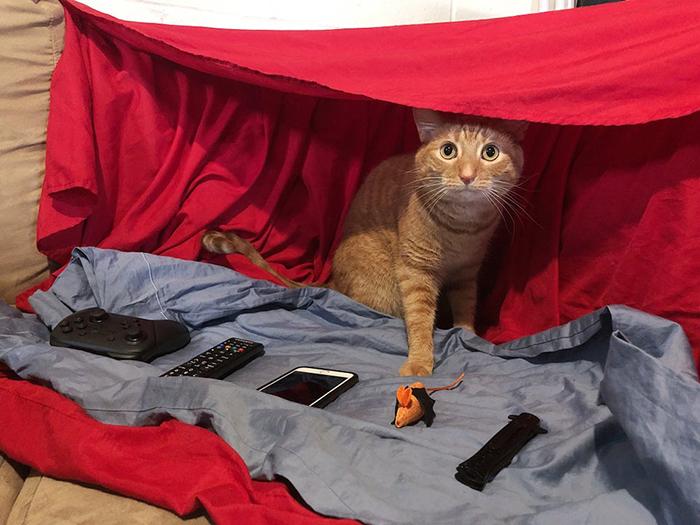 cat under a red blanket fort