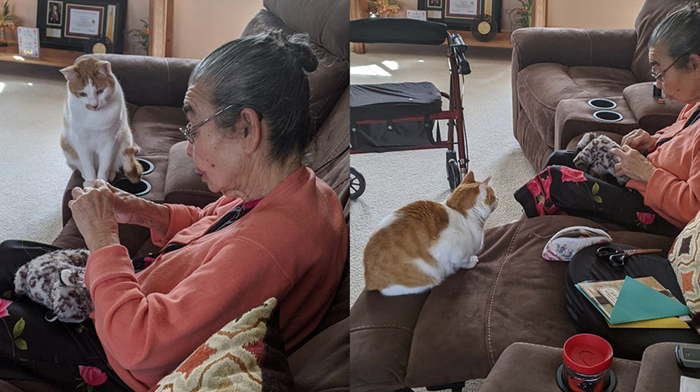 cat watching a grandma sew his toy back together