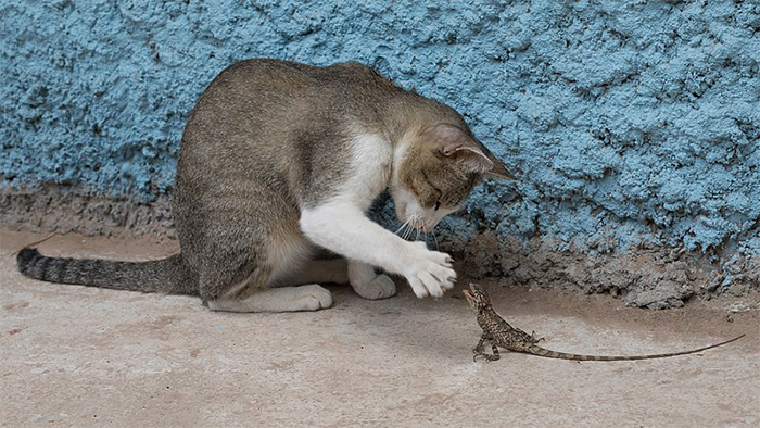 cats and lizards playing together