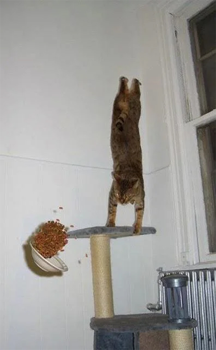 cats defying gravity
