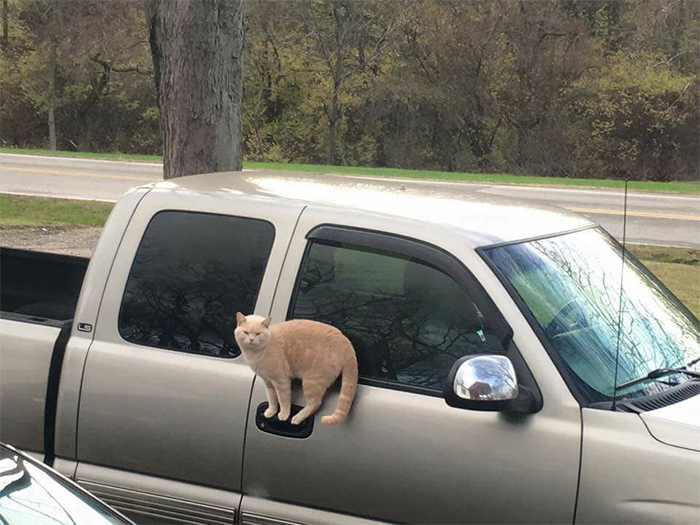 cats defying physics standing on car handle