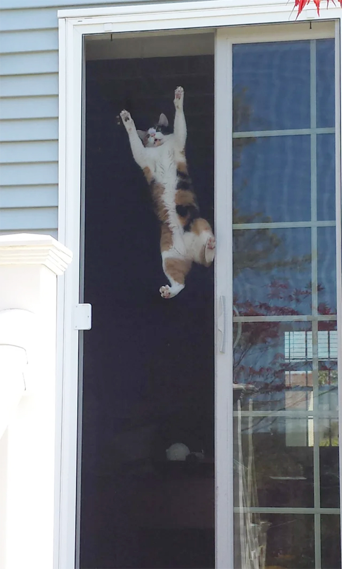 cats hanging from screen door