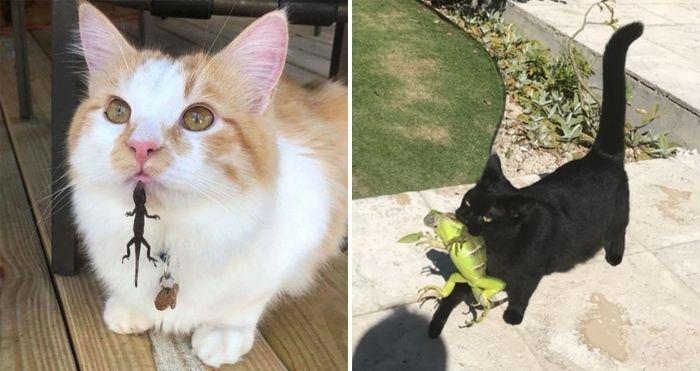 cats met lizards