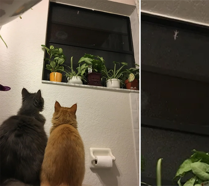cats spotted a house gecko