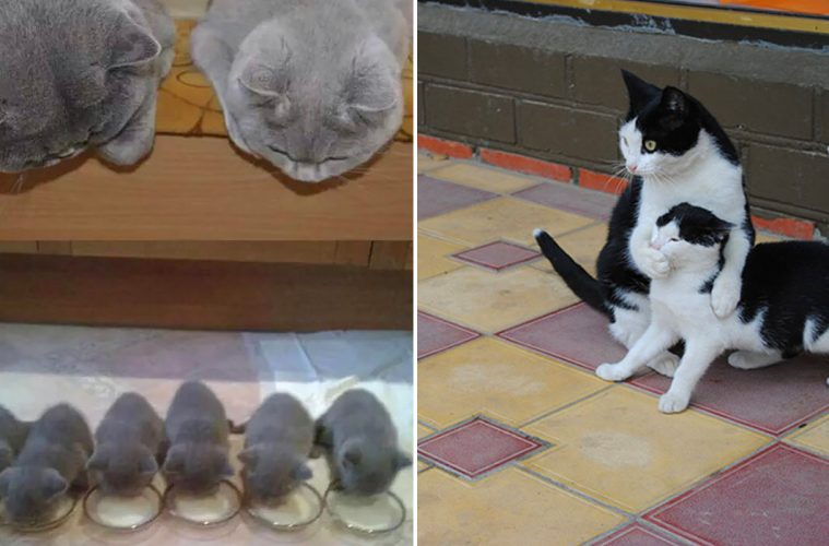 cats with Mini-Mes