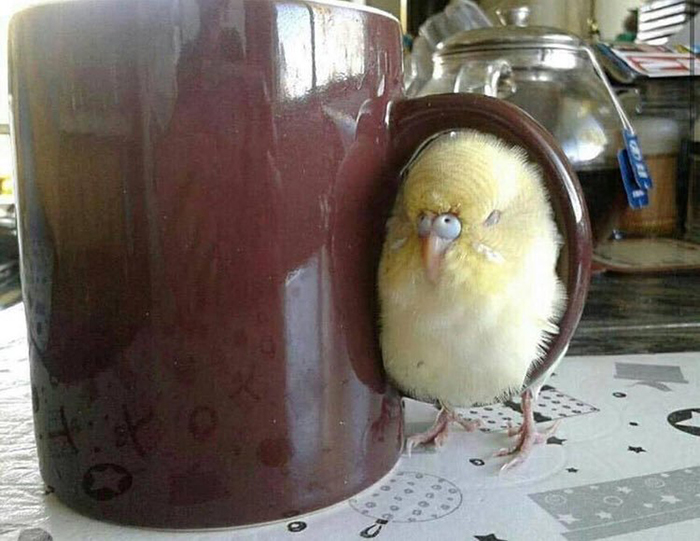 chick curled up on a cup handle
