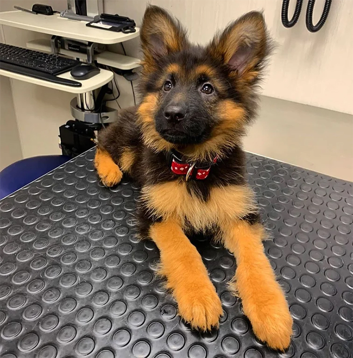 cute pup at the vet