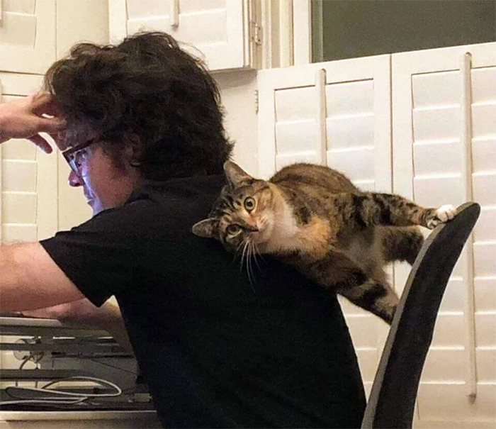 feline backrest