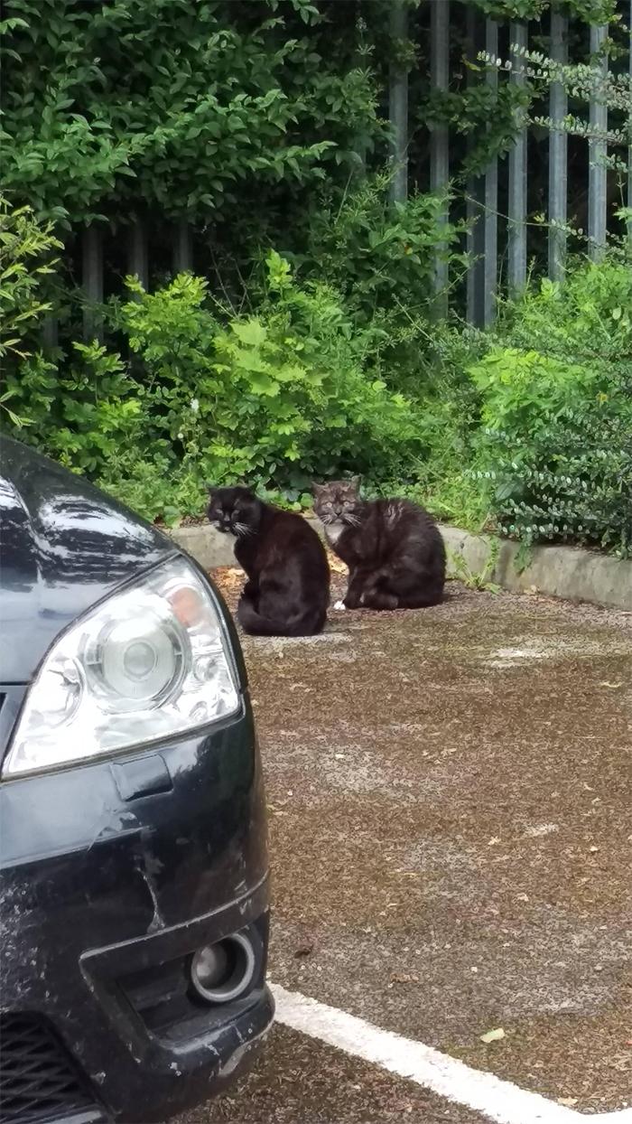 feline drug deal interrupted