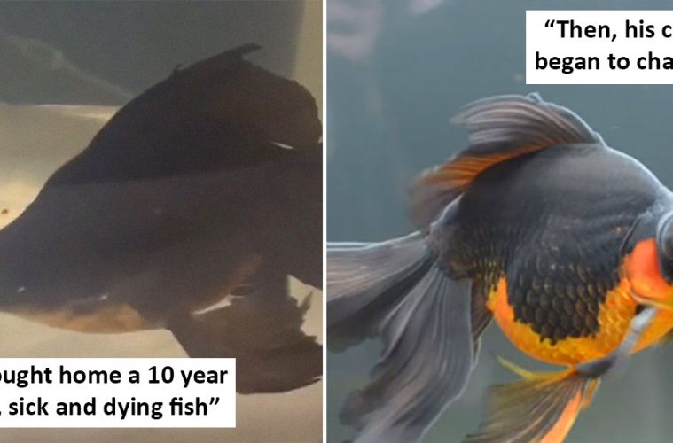fish nursed back to health