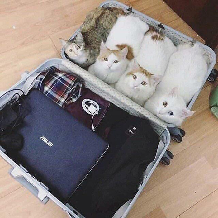 four kittens in a luggage
