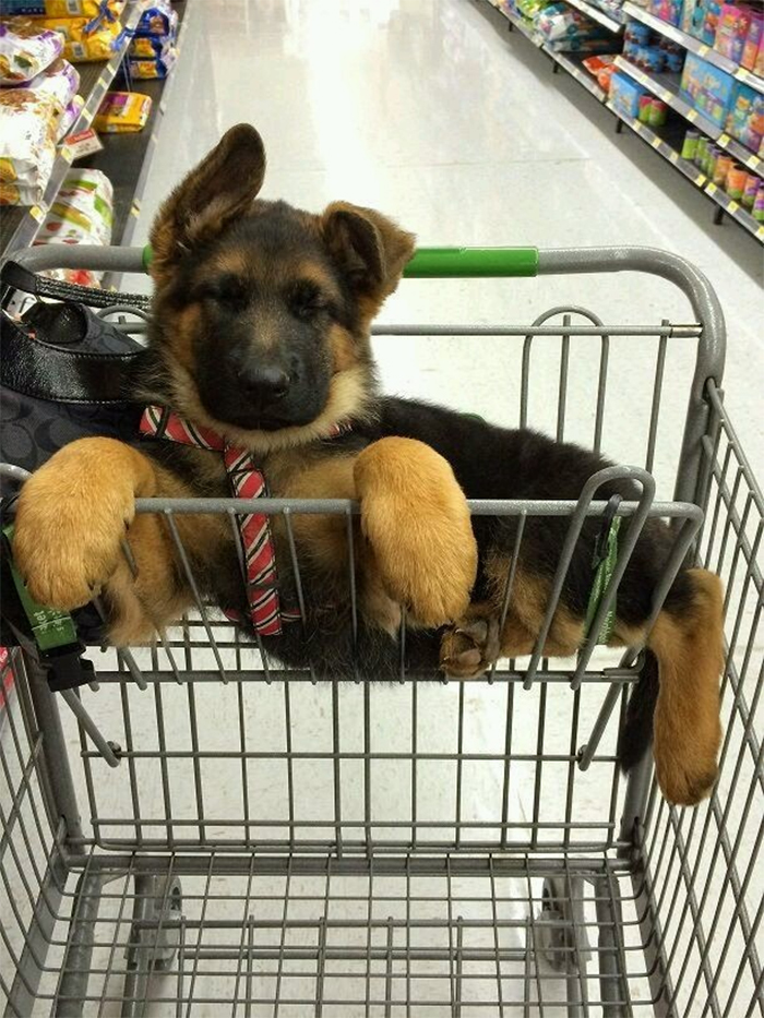 german shepherd puppies shopping cart