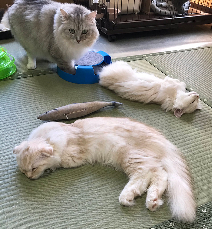 hot spring inn allows guests to stay with cats