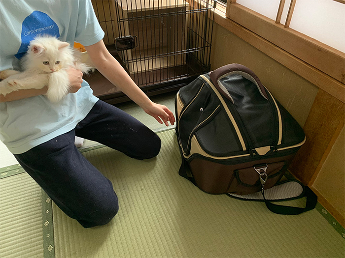 japanese inn guests share room with cats