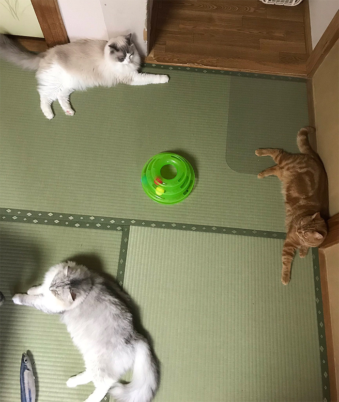 japanese inn rooms with cats