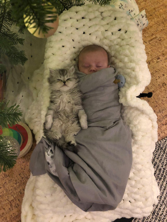 kitten and baby sleeping beside each other