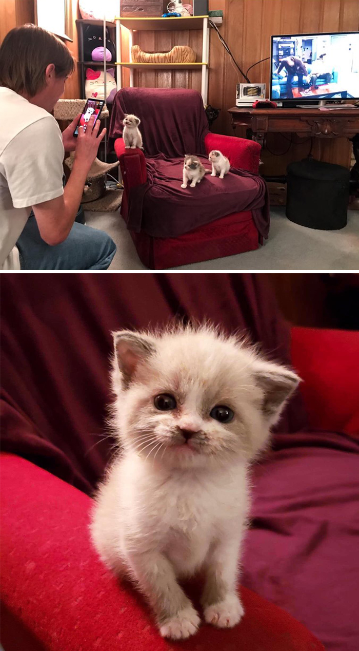 kitten posing and smiling for the camera