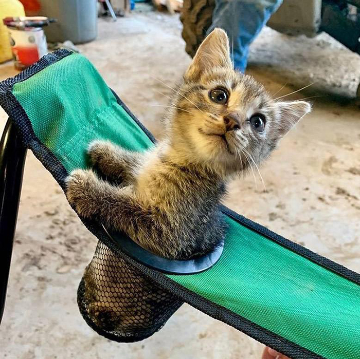 kitten sitting on a chair's cup holder