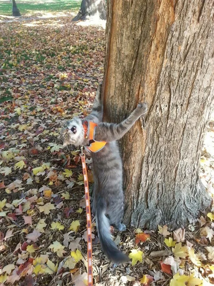 kitty hugging a tree