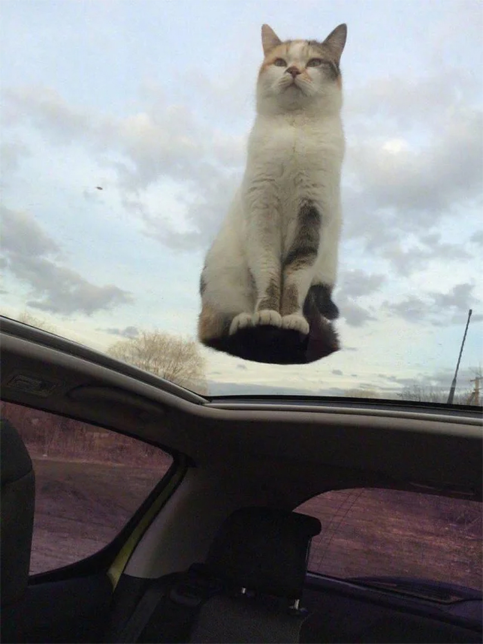 kitty on top of car roof
