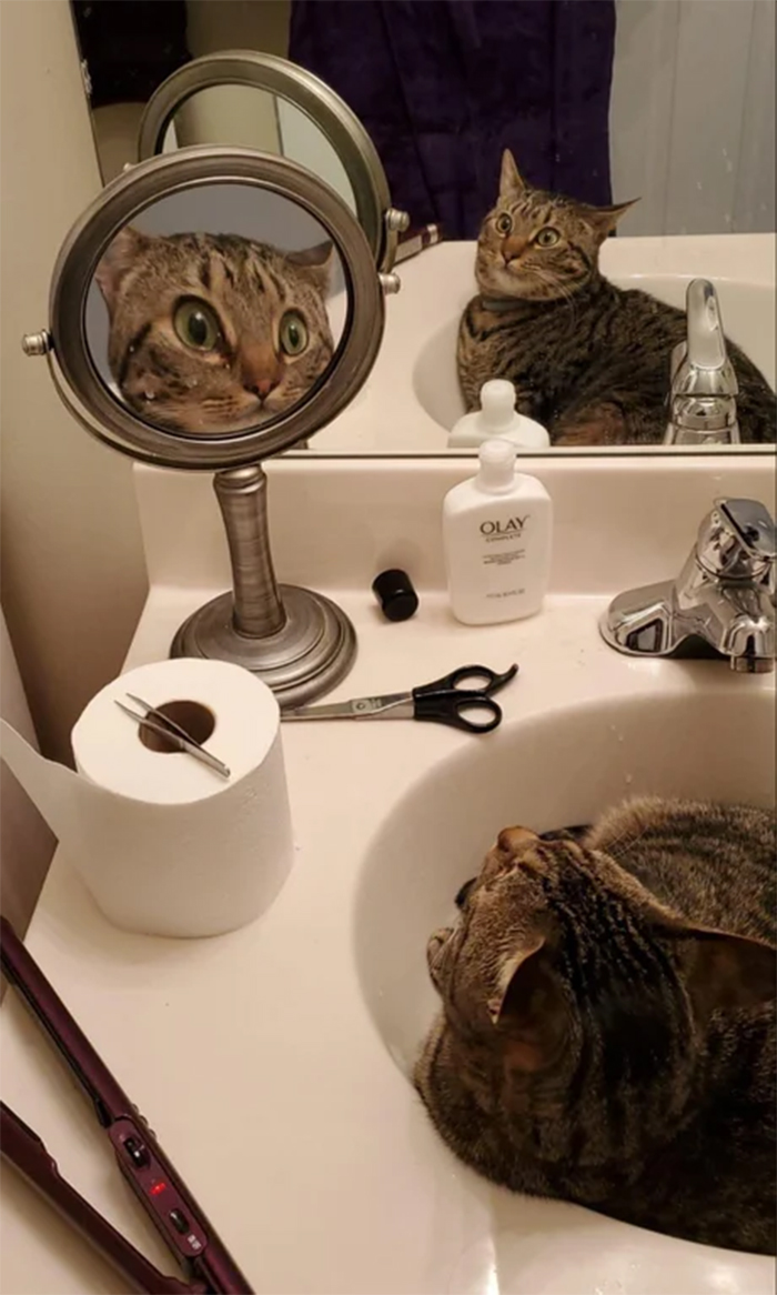 kitty shocked by mirror reflection