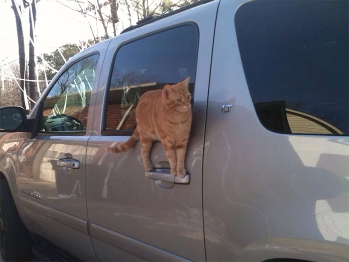 kitty standing on car handle