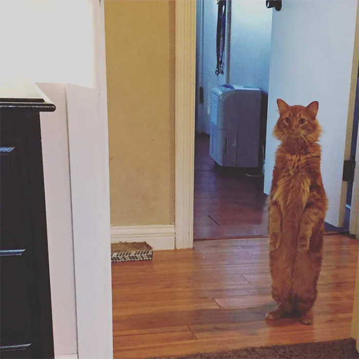 kitty standing on two feet reaction to furniture