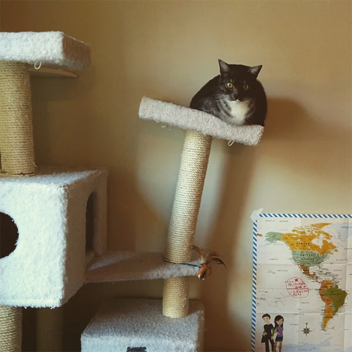 leaning tower of cat tree