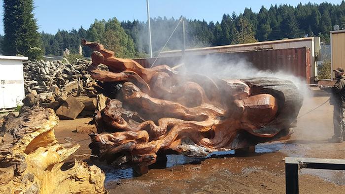 massive sea creature wooden sculpture by jeffrey michael samudosky